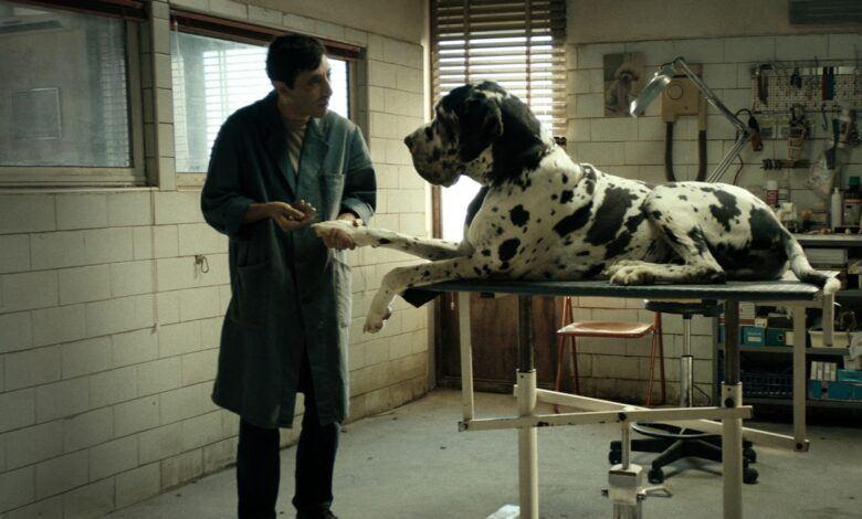 Dogman Filmi