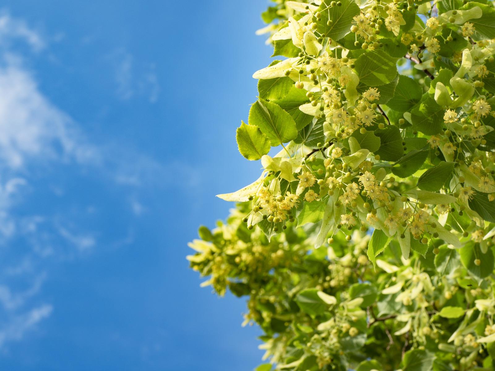 Ihlamurlar Çiçek Açtığı Zaman - Bahaeddin Karakoç