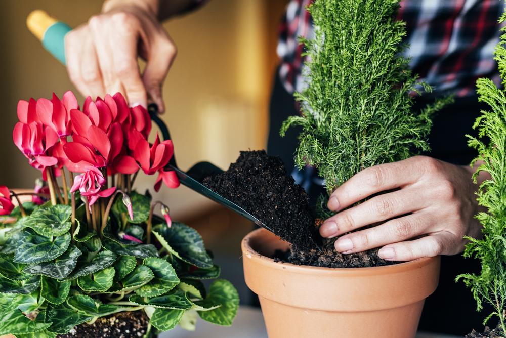 Bitki Yetiştirirken Yapılan Yanlışlar
