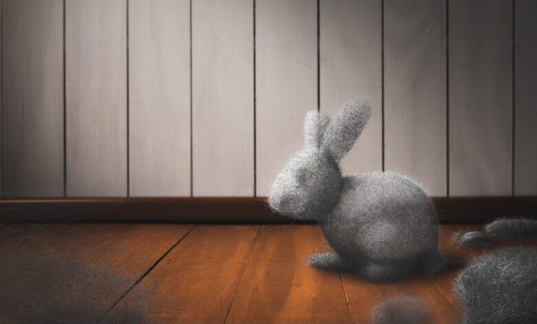 Daha Önce Hiç Toz Tavşanı Gördünüz Mü?