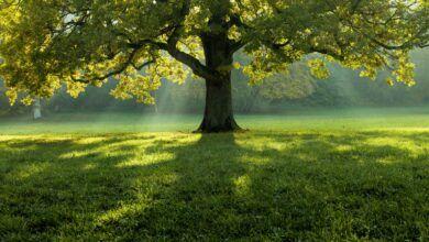 Haziran Ağaçları - Ceyhun Atuf Kansu